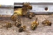 Pest Control for wasp