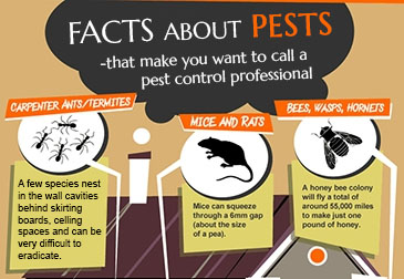 pest control perth services