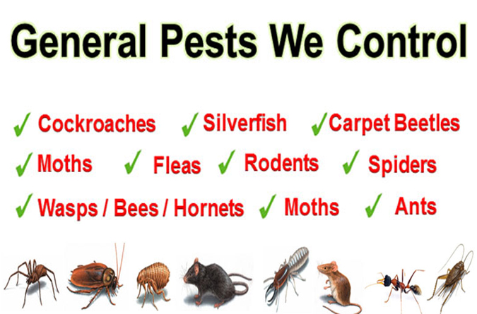 Pest Control Services Perth of Pests from Entering Your Residence