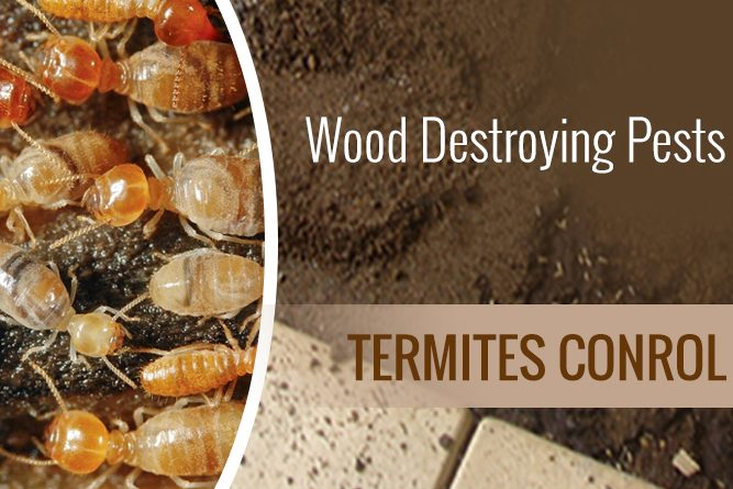 All about Termite Barriers Treatment Perth