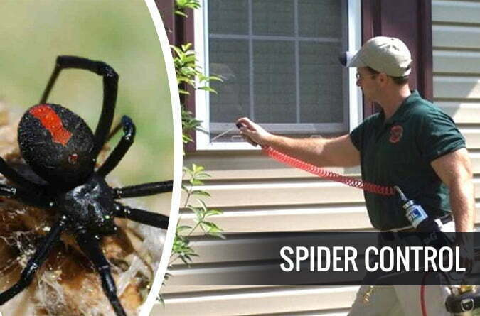 Keeping Spiders at Bay Through Spider Control Services