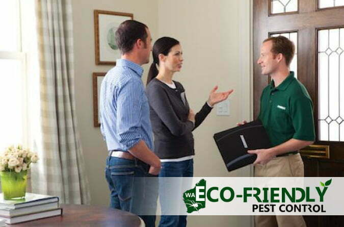 Importance of Timber Pest Inspections