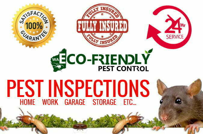 How Important Is Pest Inspection Service?