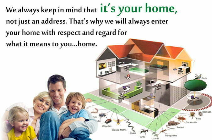 Necessity of Booking Pest Inspection Services in Advance