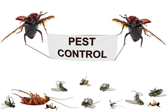 Managing Building & Pest Inspections Services In Perth