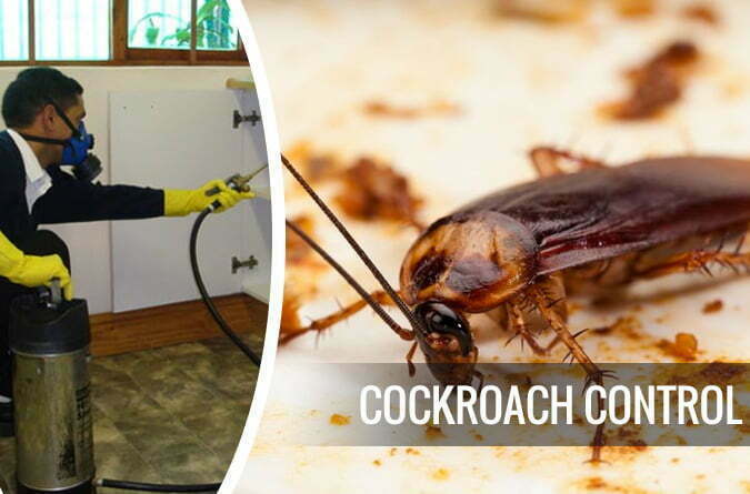 Get Cockroach Inspections Service to Avert Baleful Consequences